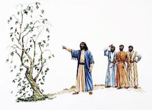 يسوع يلعن شجرة التين